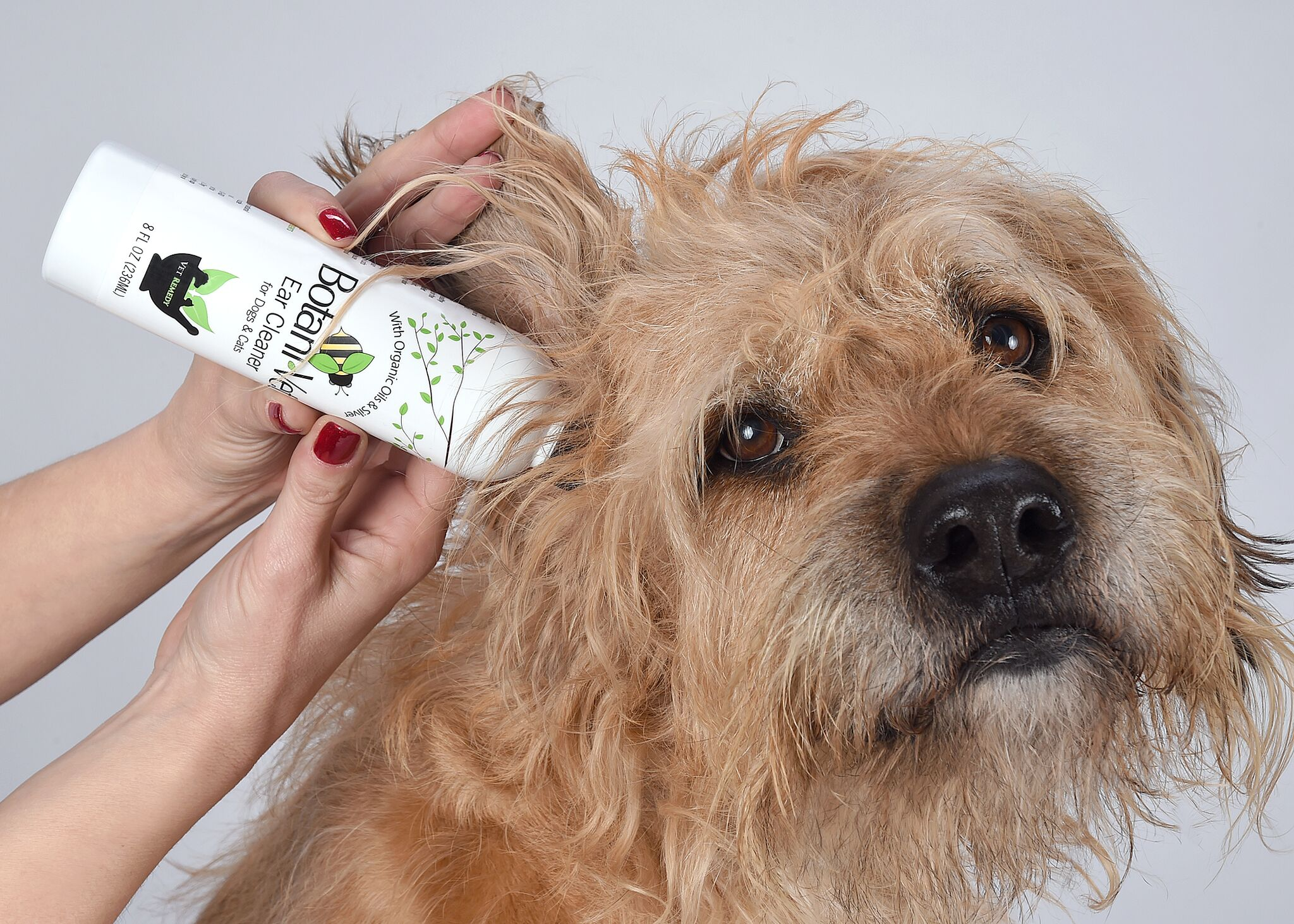 Learn the best dog ear cleaning solution and techniques